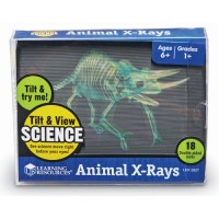 Animal X-Rays Children Science Toy