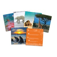 Critical Thinking Wild about Animals Photo Cards Set