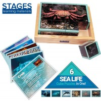 Stages Learning Real Picture Sea Life Wooden Cube Language Builder Preschool Puzzle 12