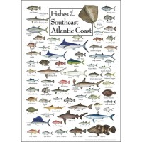 Heritage Puzzle Fish Of The Southeast Atlantic Coast By Diane Peebles 550 Pieces 18 X 24 Finished