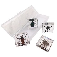 WhizKidsLab 4 Real Bugs Insect Arachnid Resin Specimen STEM Set Magnifier Fun Fact Sheet Poster