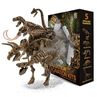 muscccm Dinosaur Toys Excavation Kits Excavate Five Different Real Fossils Great STEM Science Gift for and Archeology Enthusiasts of Any AgeCool Kids