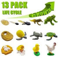 DQstar 13 PCS Life Cycle Figures of FrogChickenSea TurtleEarly Education Animal FiguresBiology Science Toys