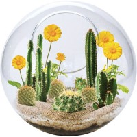 Mini Desertscape Cactus Growing Glass Terrarium Kit