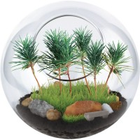 Park in a Bottle Glass Terrarium Kit