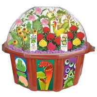 Strange Plant Collection Terrarium Dome Plant Kit