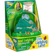 Ladybug Land Ladybug Habitat