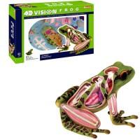 4D Vision Frog Anatomy Model