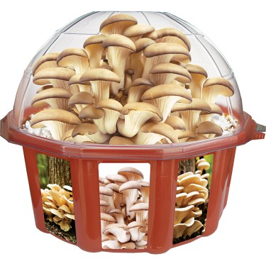 Grow Your Own Oyster Mushrooms Plant Kit